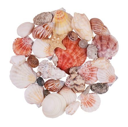 ossified: Handful of seashells and starfish on a white background Stock Photo