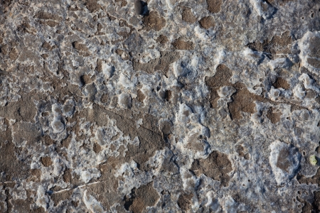 lithic: Rough surface of the stone with white growths Stock Photo