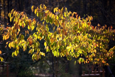 frondage: Bush with yellowing leaves on the branches fall day