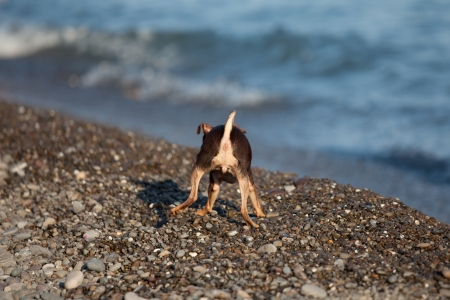 Little dog on the beach is turning his back Stock Photo - 15634666