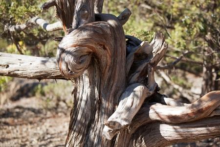 sapless: Curvo, nelle crepe del tronco d'albero secco