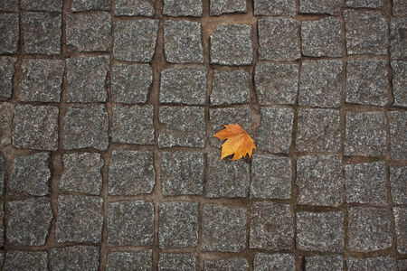 hardwearing: Orange maple leaf lying on the stone pavement