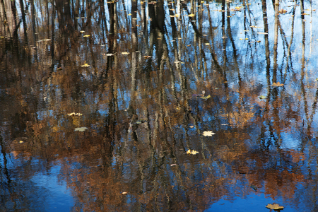 undulatory: Lake, which reflects the trees with fallen leaves