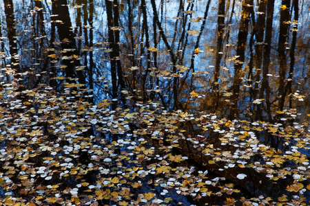 undulatory: Surface of the lake, paved with fallen leaves