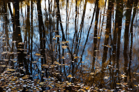 undulatory: Trunks of the trees reflected in the water autumn day