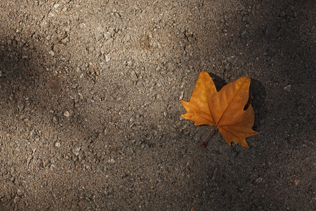 hardwearing: Dry maple leaf lying on the pavement Stock Photo