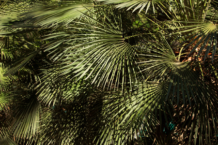 frondage: Many leaves on the branches of a tropical tree