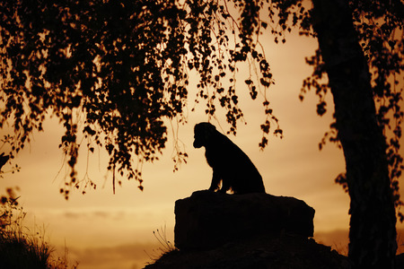anguish: Lonely dog sitting under a tree in the evening