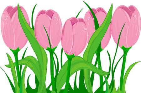 Illustration de tulipes au printemps Banque d'images - 2461526
