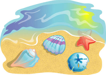sand dollar: Illustration of several types of seashells and ocean life. Stock Photo