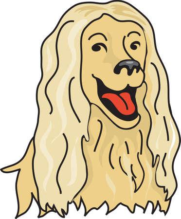afghan: Illustration of a blonde afghan hound