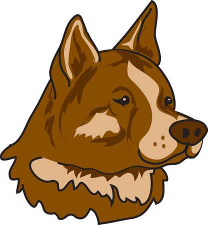 akita: Illustration of an Akita dog