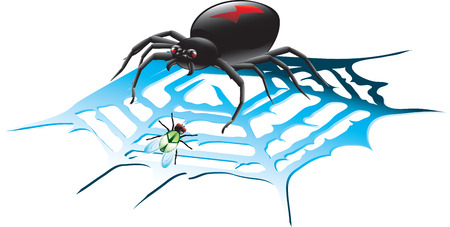 Vector illustration of a black widow spider in a web