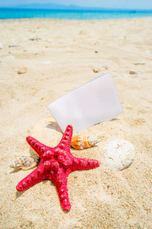 Summer theme strafish with note paper on white sand and snail Stock Photo