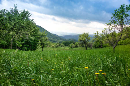 Dandelions in green grass in untouchable nature field Stock Photo
