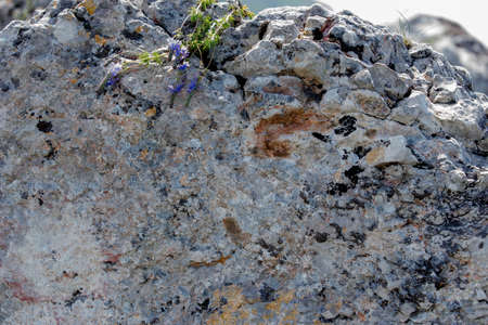 blue flower on grey rock for background with copyspace