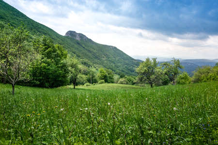 green vegetation: Green vegetation in uninhabited place