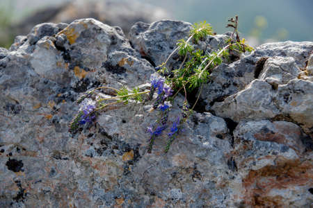 grey rock with flowers