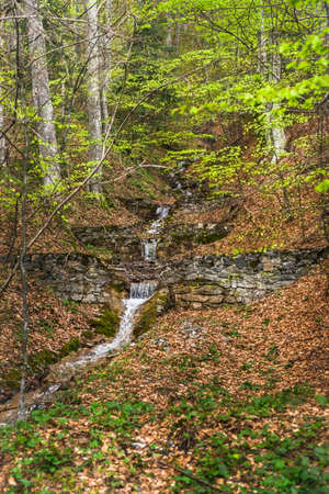 Forest with stone wall and strem through it