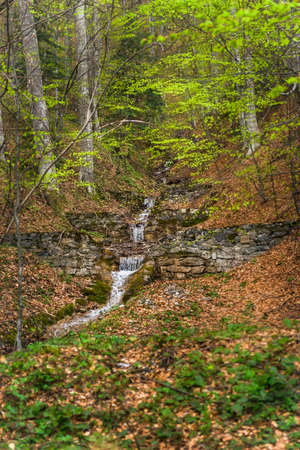 Stone wall deep in forest and stream flowing through it
