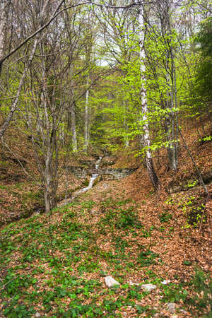 Spring in forest with stream and autumn brown leaf