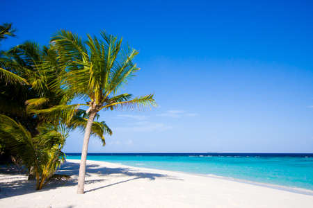 Wonderful landscape with palm on a tropical beach photo