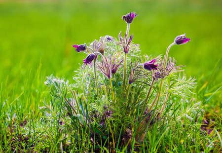 scrub grass: Scrub dream grass on the green field