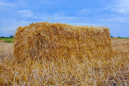 slant: Sheaf of hay, a rectangular shape is the slant, a wheat field.