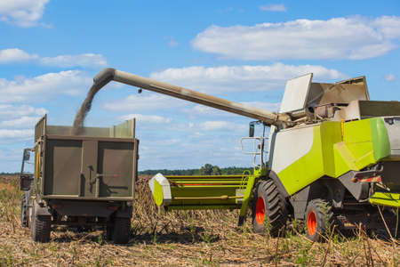 winnower: Combine harvester overloads sunflower seeds in a tractor trailer on the field, during the autumn harvest.