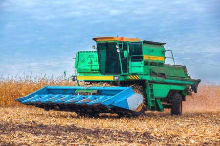 helianthus: Big harvester in the field on a sunny day mowing ripe, dry corn. Autumn harvest. Stock Photo