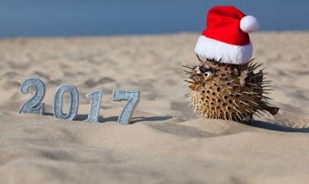 next year: On the beach, in the sand are the numbers of new 2017 and lies next to fugu fish, which is wearing a Santa Claus hat.  New Year Celebration and Christmas in the ocean, the sea. Traveling. Stock Photo