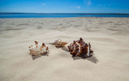 Three beautiful, colorful, bizarre shapes of seashells lying on the sand. Tourism, Travel. Stock Photo