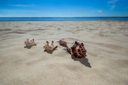 four beautiful, colorful, bizarre shapes of seashells lying on the sand. Tourism, Travel.