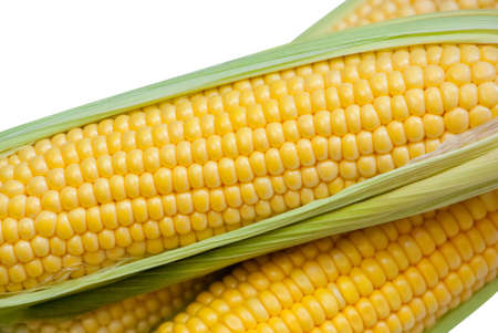 Young, juicy, ripe, raw corn on the cob close-up lying on green leaves on a white background. Collect corn crop. The concept of healthy eating.