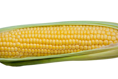 closeup, grain, isolated, produce, ripe, table, natural, preparation, delicious, agriculture, seeds, green, white, sweet, organic, leaf, field, yellow, growing, crop, pile, maize, summer, farm, husk, cereals, vegetable, sweetcorn, trend, season, farming,