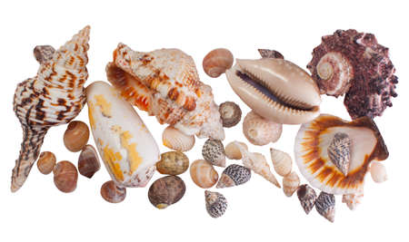 Beautiful seashells isolated on white background.