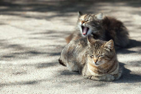 Two adult brown cats rest on the street.
