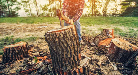 Male Lumberjack in the black-and-red plaid shirt with an ax chopping a tree in the forest. Stock Photo
