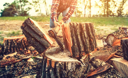 Male Lumberjack in the black-and-red plaid shirt with an ax chopping a tree in the forest. Stok Fotoğraf