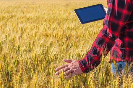 Businessman is on a field of ripe wheat and is holding a Tablet computer. The concept of the agricultural business.