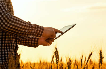 There is a businessman on a field of ripe wheat and is holding a Tablet computer. The concept of the agricultural business. Standard-Bild - 131698777