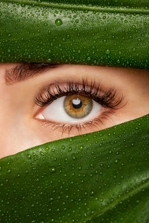 Beautiful Woman with long lashes on the background of a leaf of monstera with water droplets.. Eyelash extension procedure. Stok Fotoğraf