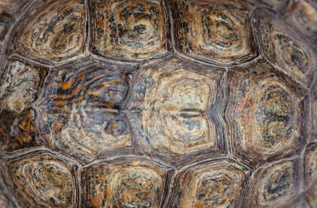 Beautiful bright tortoise shell closeup. Breeding turtles at home.