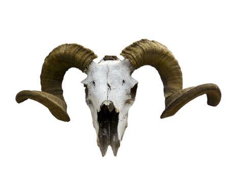 Crâne vieux bélier isolé sur blanc