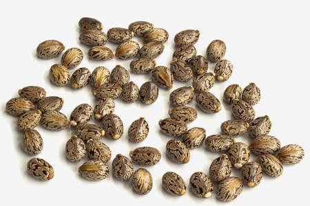 ricin: Huile de ricin graines-Ricinus communis Banque d'images