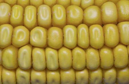 yeloow: Close up of corn on the cob