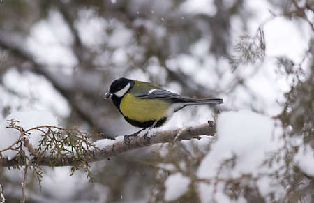 A bird on a branch, winter environment photo