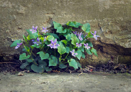 grew: Flower grew in a crevice of concrete