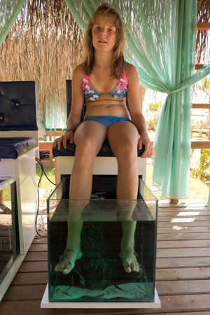 doctor fish wellness fish: Doctor fish pedicure.A young girl in the wellness center, the use of fish therapy