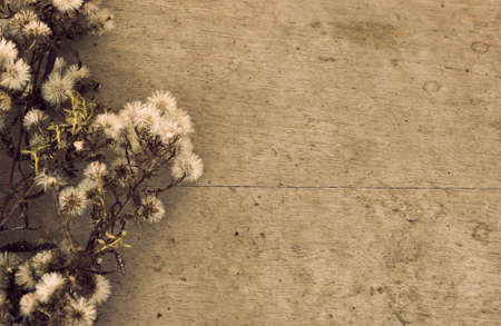 dried flower arrangement: Dried wild flowers on the old wooden background